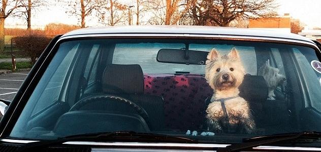 En Floride, il est désormais légal de fracturer une voiture pour sauver un chien